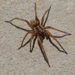 Уничтожение пауков в Жигулевске